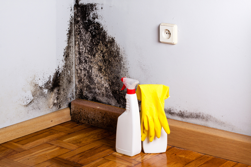 air-pollution-and-asthma-mould