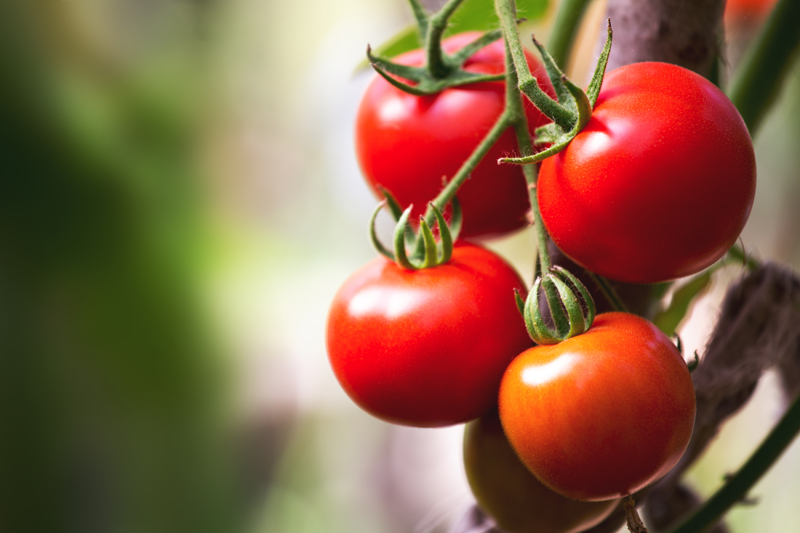 food-for-asthmatics-tomatoes