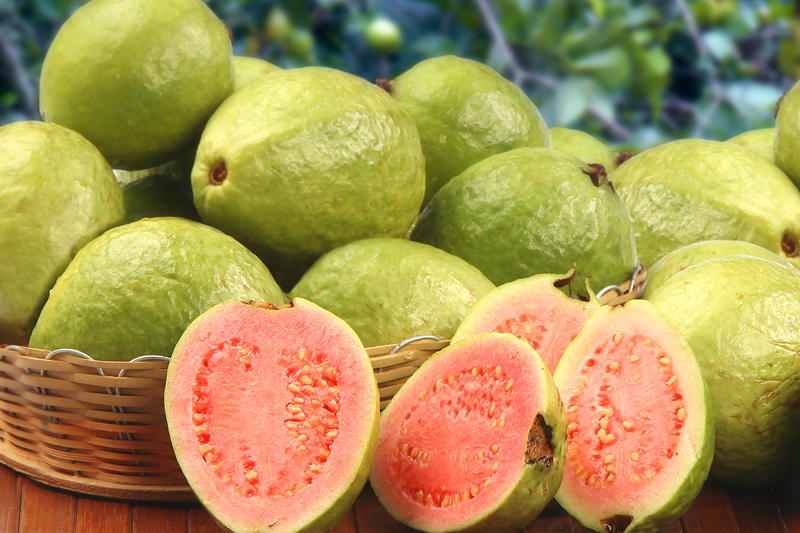 fruit-for-family-health-guava