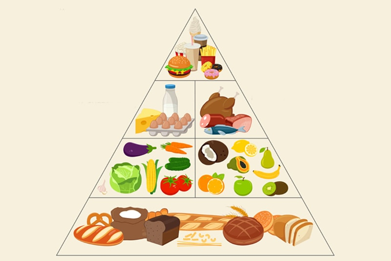 Food-Pyramid-header