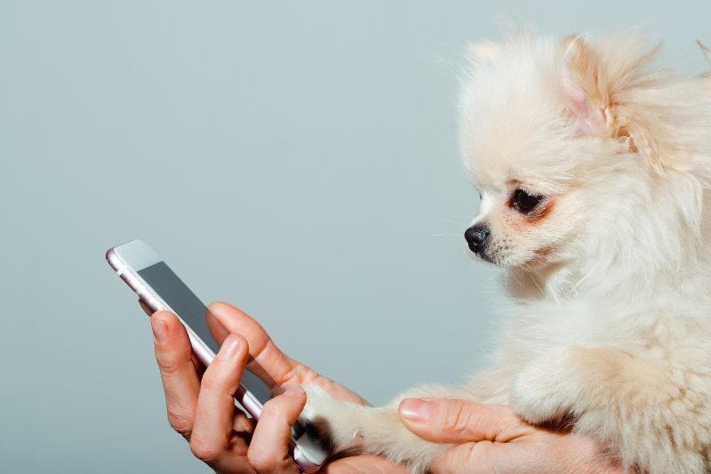 Get Your Pets On Video Call - Activ Living
